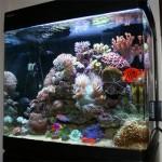 Чистый аквариум - залог здоровья его обитателей