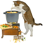 catsfood